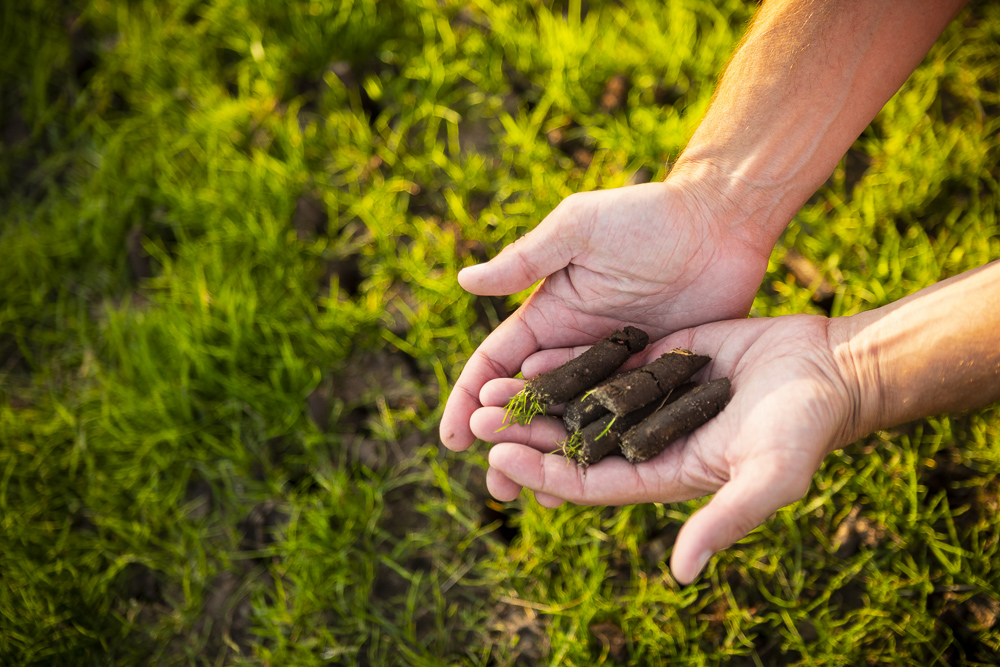 Lawn aeration soil plugs allow air and water to penetrate the grass roots