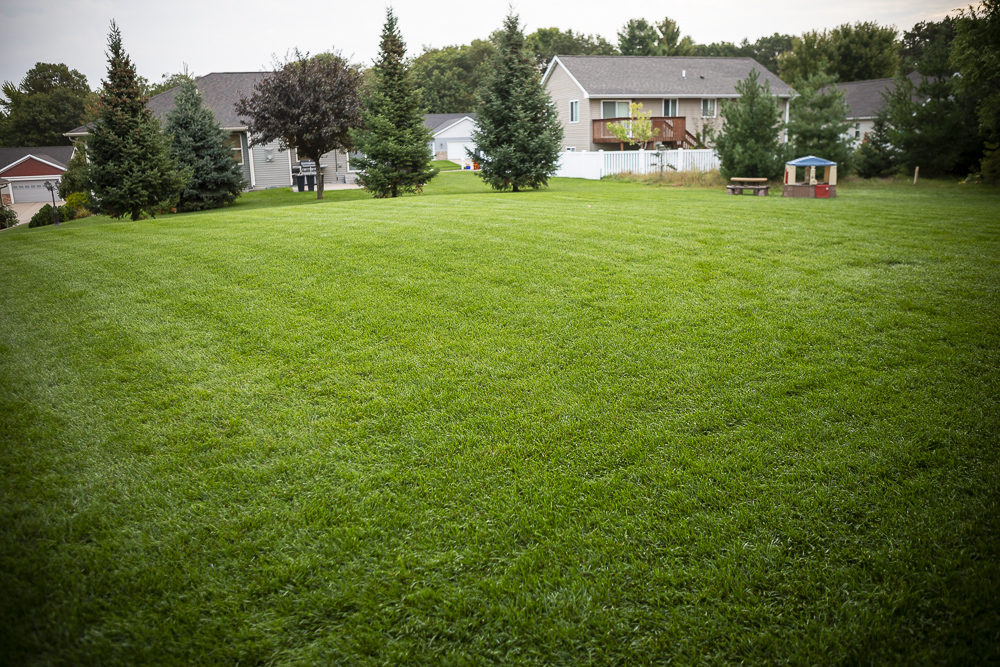Lush, healthy lawn in Eau Claire, WI cared for by RainMaster