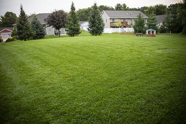 lawn mowed correctly without weeds