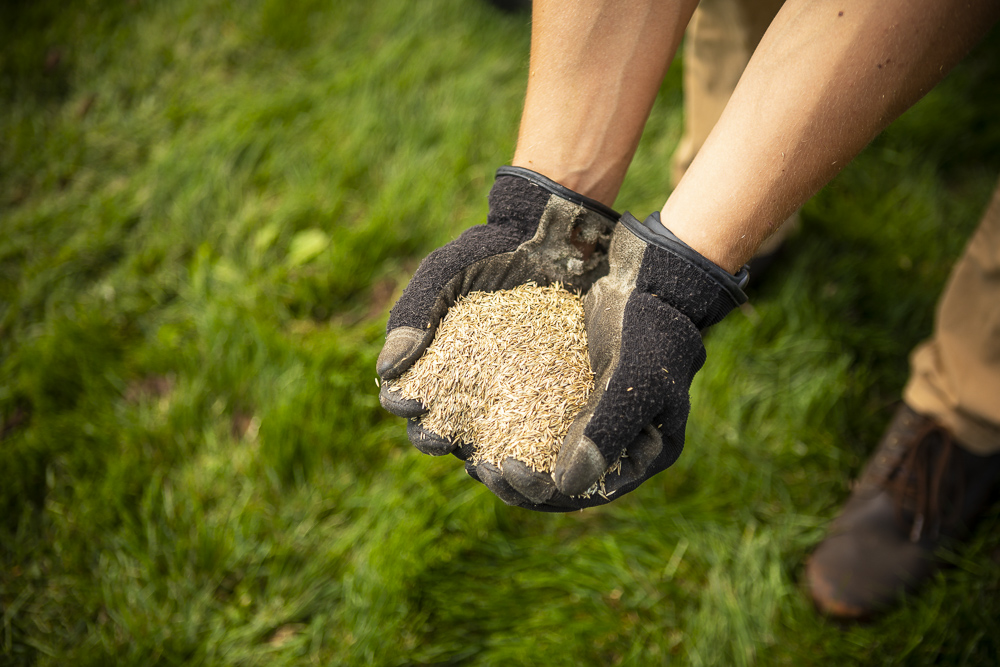 Grass seed mixture for healthy lawn